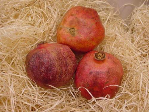 how to grow pomegranate indoors