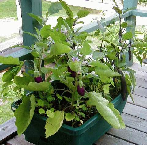 1000 Images About Container Gardening On Pinterest 640 x 480