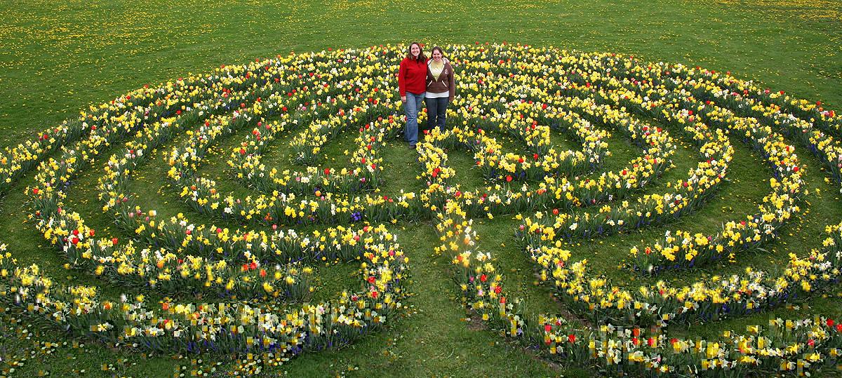 Flower bulb labyrinth, Annual Flower Research at Bluegr Lane ... on