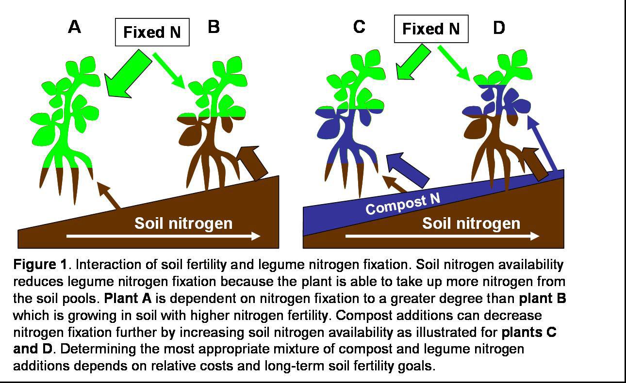 Model Nitrogen Soil Interaction of Soil Nitrogen