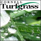 Cornell turfgrass